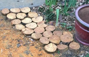 Osage orange chips as pavers